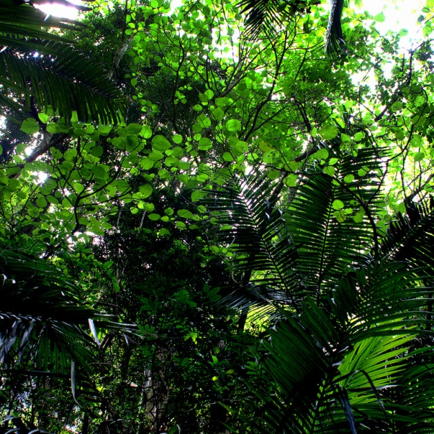 Rainforest canopy, Mt Glorious © 2013 Peter Ostergaard