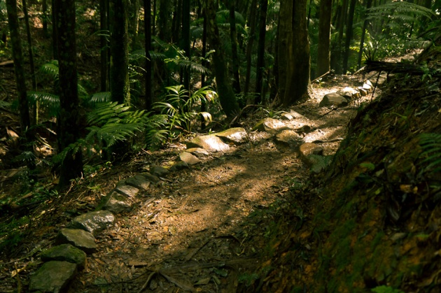 Rainforest Path, Mt Glorious © 2011 Nick Bedford