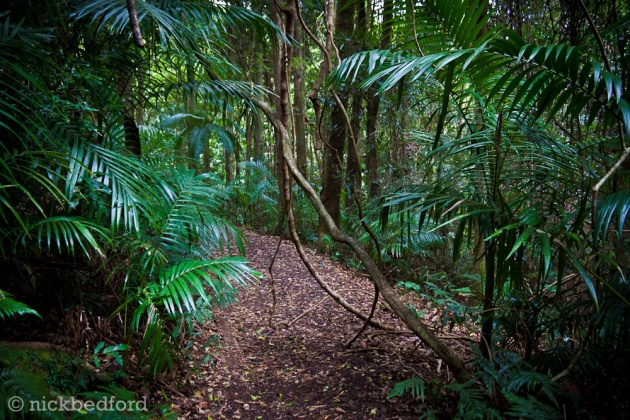 The Vines, Mt Glorious © 2010 Nick Bedford
